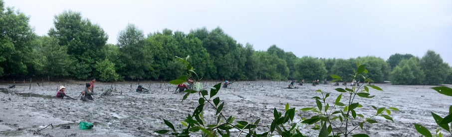 Champ de mangrove